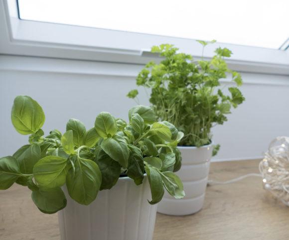 Kleiner Kräutergarten in heimischer Küche