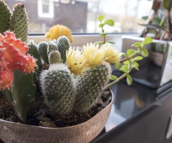 Kleine bunte Kaktusgrüße
